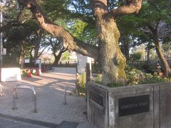 駅から5分ほどで碑文谷公園に到着しました 清々しい気持ちの良い早朝のお散歩です