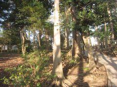 すずめのお宿緑地公園に来ました 昭和初期にはこの辺りの竹林に雀が住み着き、「すずめのお宿」と呼ぶようになり、この土地の所有者で長年一人で住んでいた角田セイさんの「土地は没後国に返したい」という意思を生かし、目黒区が国から借り受けて「すずめのお宿緑地公園」ができたそうです