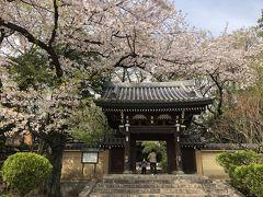 4月3日。こちらは南池袋の法明寺、桜の名所です。桜は散りかけ。