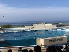 結局来ました「オキちゃん劇場」。このイルカショーはレベルが高いです。それよりも、このオキちゃん、海洋博公園ができた1975年からずっとイルカショーをやっているということを聞いて驚きです。