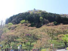 まずは「津久井湖 花の苑地」の駐車場に車を停め、城山の全景を眺める。すでにソメイヨシノの咲く時期は終盤。