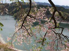 続いて城山湖へ。少し標高が上がった分桜は山桜となり、まだ花が残っていたので湖面をバックに撮影。人造湖だが、1周する遊歩道が整備されているらしい
