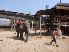 翌日は、カレンルアンミットエレファントキャンプに行きました。チェンマイ周辺にはいくつかのエレファントキャンプがありますが、無理に象に芸を教えて金儲けをしているようで痛々しいですが、ここはそんなことありません。素朴なカレン族とその家畜という感じで象が飼い主になついています。もちろん芸等教えて金をとろうなどしていません。私はここが好きです。