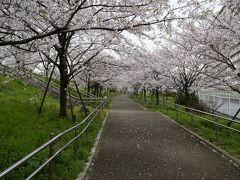荒川沿い、近くのマンションの名前も桜、笑い