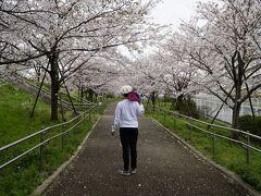 小松川千本桜公園の入り口