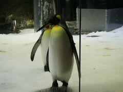 このペンギンゾーンはボートに乗って、ペンギンたちの間を進んでいきます