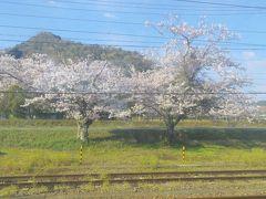 朝早く起きて最寄り駅で待ってると鶯の鳴き声が聞こえてきて驚きましたが幸先よいスタートでした。 写真は上郡駅停車中に撮った1枚です。この先、川沿いに並ぶ桜並木が満開で綺麗でした。