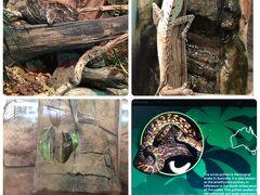 海の生き物を堪能した次は、隣りの建物。オーストラリアの動物たちのいる「ワイルドライフシドニー動物園」へ。 よーく見ると居ました、木と同色化しているヘビ、カメレオン、カエル等。