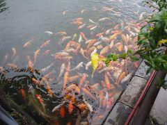 この王宮の池にいる鯉たち。4traのスポットにも地球の歩き方にも載っていました。なにげに有名らしい。