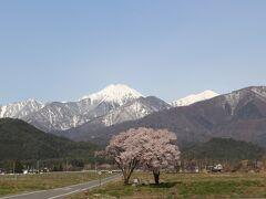 そして本命の常念道祖神の桜へ。 ここも近づいてから結構迷って到着です。