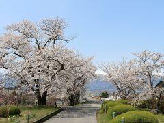 最後、光城山の桜はどうかな、時間もないので、雰囲気だけでもと訪問しましたが、 10時の時点で駐車場は満車でした。 これは、駐車場に入れず、帰路につく前に見えた残雪と桜の景色。