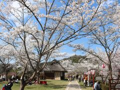広島空港到着後、初めはまず竜王山に行ってから醍醐桜に向かおうとしましたが、 下道なので時間が不確かのため、まず醍醐桜の近くの桜の名所の三休公園へ向かいました。