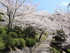 到着したのは桜の名所・千光寺公園。