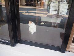 お土産の買い忘れがあったので、昨日に引き続きユーグレナモールへ。 猫!