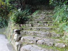 門から約1分上って行くと左側に殿様も歩いた少し急な登城口(天守まで約300m)と、正面になだらかそうに見えるが少しアップダウンがあって遠回りする(天守まで約700m)登城口があります。今回も殿様と同じル-トで登城です。  宇和島城は約350年も昔のままの姿を残しているためか、登城道も昔のままなので多彩な草木に覆われ、珍しい植物も多く見られます。