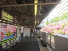 駒込駅です ホームを囲むように咲くツツジの花