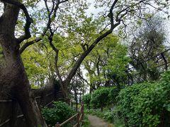 すぐ近くに馬込自然林区民緑地があります。