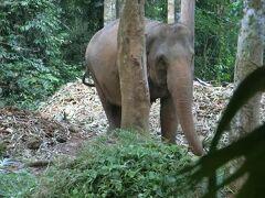 象さんいたっ♪ そういえばチャーン島のチャーンは象のことだって