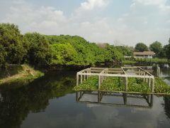 そして、遺跡に続くピマーイの名所「サイ・ンガーム公園」へ。