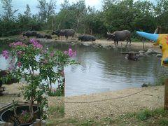 亜熱帯植物楽園由布島