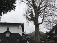 飛騨国分寺の大イチョウ