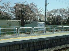 木戸駅。ここも桜が咲き始めてる。