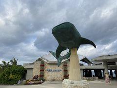 今日も朝から美ら海水族館へ。