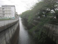 石神井川沿いに下流方向へと歩いて行く  氷川台駅から城北中央公園の間は桜並木が続いています もうすっかりと花も散り、緑色の葉が茂っています