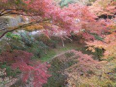 菩提仙川の紅葉