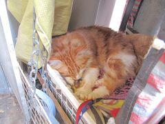 <香港島・上環> 科記咖啡餐室の猫さんはお休み中。