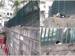<香港島・上環> 百姓廟の近くにいた猫さん。