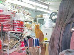 <九龍・油麻地> 佐敦駅近くの手芸品店の猫さん。