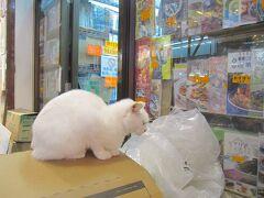 <九龍・油麻地> 佐敦駅から歩いて夕飯に行く途上であった白加士街の猫さん。近くに寄れたのに、アングルが決まらず残念。