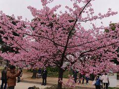 ホテル前の錦糸公園には桜が咲いていました。