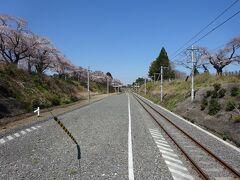 【その2】からのつづき  夜ノ森駅。天気もよく、桜も満開。 でも、まだ立ち入り制限区域も多くて、人がほとんどいない。