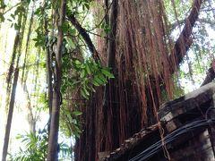 バンヤンツリーが屋根を突き抜けている古い建物をそのまま生かして、 お店が出来ていました。