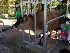 ひるぜんジャージーランド ジャージー牛のちちしぼり体験