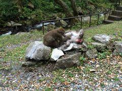 神庭の滝 おサルさんがいっぱいいます