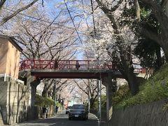 桜坂 所用で沼部駅に降り立ったので、目的地へ行く前に桜坂に寄り道。 桜の時期の沼部と言えば「桜坂」ですから・・・ せっかく近くまで来たので寄ってみると、ちょうど桜がきれいに咲いていて、日曜日とあってか、若い人たちが大勢来ていました。