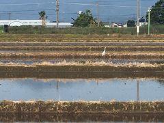 3月末からの約2か月間の出社規制のテレワーク期間中に始めた朝ランと朝ウォーキング!  土日は基本的に朝ラン(^_^;)  田んぼに水が張られてて田植え間近やけど、もう白鷺がいた!