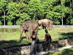 途中の飼育施設らしきところには、数頭のゾウが。  このボロブドゥール史跡公園、ゾウ乗りも楽しめるようです。