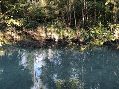 食事の後向かったのは、富良野周辺の観光スポットの1つである美瑛の青い池。