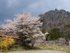 真田幸村が幼少期を過ごしたとされる岩櫃城跡がある岩櫃山に寄って見る事に! 桜が満開で、岩櫃山と共演です! 写真的に少し曇ってるのが勿体ないです。