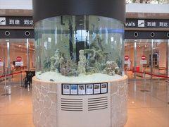 新石垣空港へ.熱帯魚が綺麗でした.