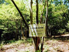 トトロの森28号地