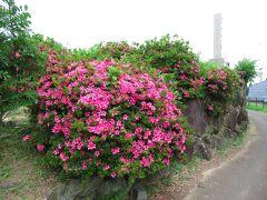 細い道をしばらく歩いていくと、下赤阪城跡に着きます。下赤阪城は元弘の乱の舞台となった城で、鎌倉時代の末期に楠木正成によって築城されました。倒幕で後醍醐天皇が笠置山で挙兵した際に、楠木正成もこの地で挙兵したそうです。