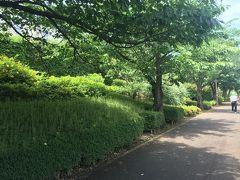 周辺はきれいに整備された緑道。