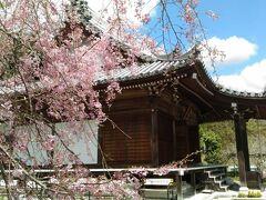 和歌山県唯一の関西花の寺24番子安地蔵寺 桜の時期ですが、本来はフジで有名な寺