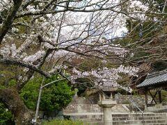 奈良県の五條市から峠を越えて大阪に入ると河内長野市 ここにあるのが25番観心寺 桜がきれいな時期