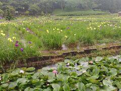 6月になり三田の第11番 永澤寺に 菖蒲園、芝桜園、牡丹園などあり、季節に応じて花が楽しめます